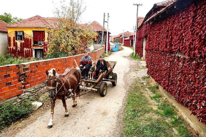 szerb-paprika-7